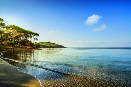 Punta Ala, grupo de árbol de pino, playa y bahía del mar. Toscana, Italia Europa