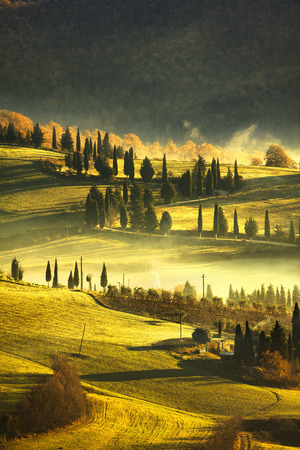 cypress: Tuscany foggy morning, farmland and cypress trees country landscape. Italy, Europe. Stock Photo