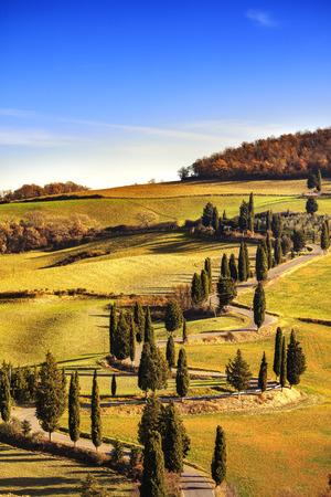 monticchiello: Cypress tree scenic road in Monticchiello near Siena, Tuscany, Italy, Europe. Stock Photo