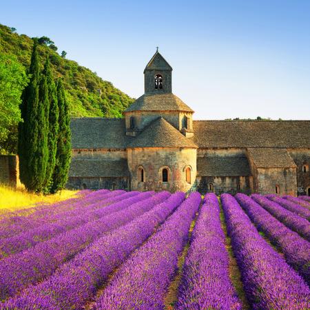 Abbaye de Sénanque et rangées en fleurs de lavande fleurs sur le coucher du soleil. Gordes, Luberon, Vaucluse, Provence, France, Europe.