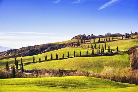 Cypress trees scenic road. Siena, Tuscany, Italy. Stock Photo