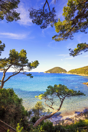 sea cliff: Elba island sea, Portoferraio Viticcio beach coast and mediterranean pine trees Tuscany, Italy, Europe. Stock Photo