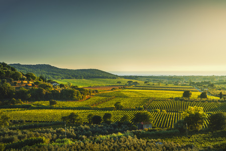 Bolgheri and Castagneto vineyard aerial view on sunset. Maremma Tuscany, Italy, Europe.