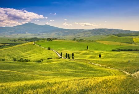 Tuscany landscape, rural road, trees and wheat field. Crete Senesi, Italy Europe