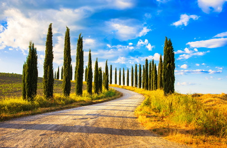 Italian cypress trees rows and a white road rural landscape. Siena, Tuscany, Italy, Europe. Stock Photo