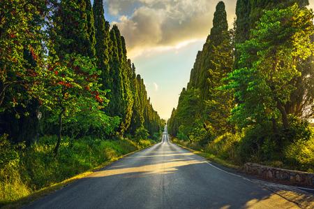 raod: Bolgheri famous cypresses trees straight boulevard landscape. Maremma landmark, Tuscany, Italy, Europe.
