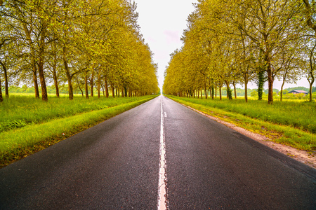 the loire: Straight empty wet road between green trees. Loire valley. France.
