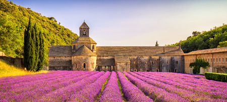 abbaye: Abbey of Senanque and blooming rows lavender flowers panorama at sunset. Gordes, Luberon, Vaucluse, Provence, France, Europe.