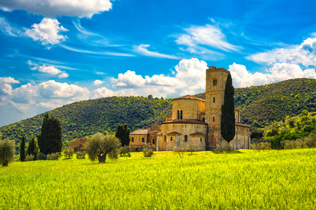 Sant Antimo, Castelnuovo Abate Montalcino church, trees and wheat field. Val d Orcia Tuscany, Italy, Europe