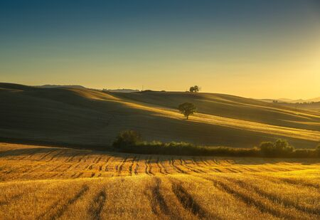 Tuscany countryside panoramic view, trees, rolling hills and green fields on sunset. Italy, Europe