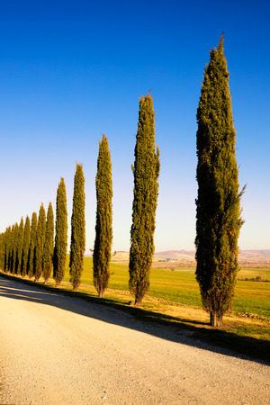 Tuscany, cypress tree group row and white rural road on sunset. Siena, Orcia Valley, Italy, Europe. Stock Photo