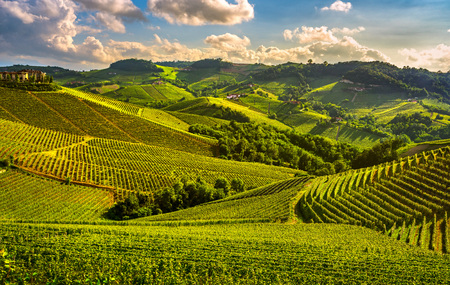 Sonnenuntergangspanorama der Weinberge von Langhe, Serralunga d Alba, Piemont, Norditalien Europa. Standard-Bild