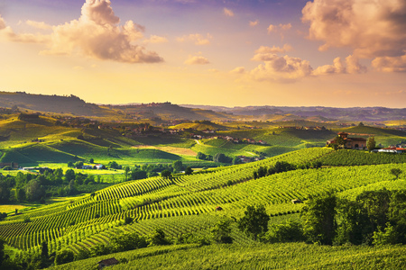 Langhe vineyards sunset panorama, near Barolo,  Piedmont, Northern Italy Europe.
