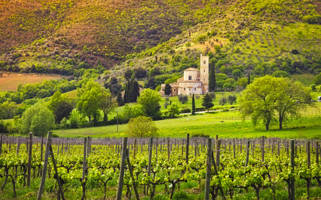 Sant Antimo, Castelnuovo Abate Montalcino church, vineyards and secular olive tree. Val d Orcia Tuscany, Italy, Europe