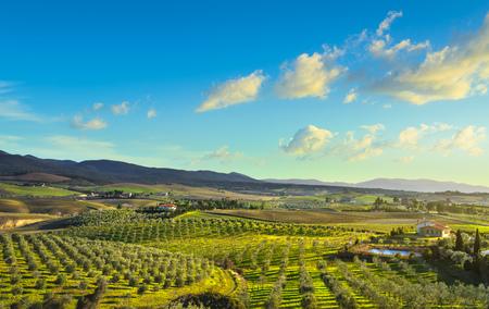 Panoramablick auf die Landschaft der Maremma, Olivenbäume, sanfte Hügel und grüne Felder bei Sonnenuntergang. Meer am Horizont. Casale Marittimo, Pisa, Toskana Italien Europa.