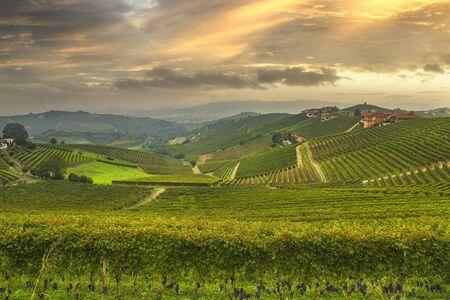 Langhe panorama, Barbaresco vineyards view at sunset, Unesco Site, Piedmont, Northern Italy Europe.