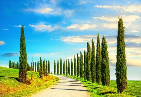 Des rangées de cyprès italiens et un paysage rural de route blanche. Sienne, Toscane, Italie, Europe.