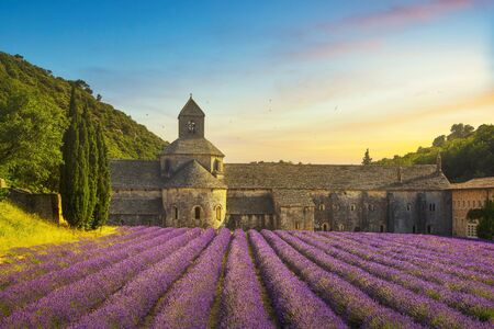 Abbey of Senanque and blooming rows lavender flowers panoramic view at sunset. Gordes, Luberon, Vaucluse, Provence, France, Europe.