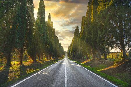 Bolgheri célèbre cyprès arbres paysage boulevard droit au coucher du soleil. Monument de la Maremme, Toscane, Italie, Europe.