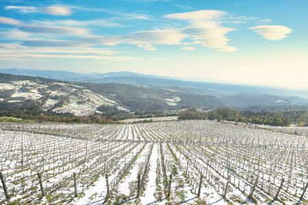 Vineyards rows covered by snow in winter. Riparbella, Pisa, Tuscany, Italy Banco de Imagens