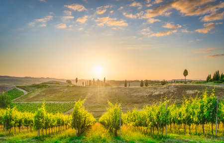 Certaldo countryside, vineyards and trees at sunset. Florence, Tuscany, Italy.