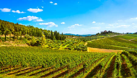 Radda in Chianti vineyard and panorama at sunset in autumn. Tuscany, Italy Europe.