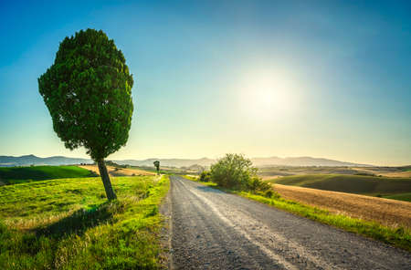 Rural road and cypress tree in Santa Luce countryside. Rolling hills on background. Pisa, Tuscany, Italy, Europe