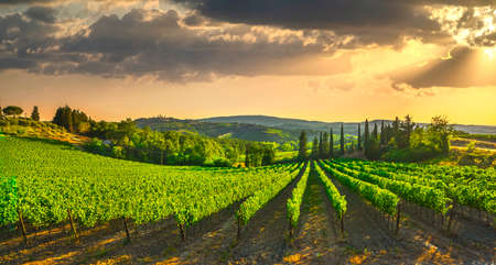 San Gimignano medieval town towers skyline and vineyards countryside landscape panorama on sunrise. Tuscany, Italy, Europe. Archivio Fotografico
