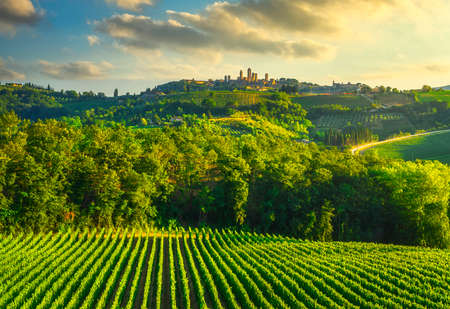 San Gimignano medieval town towers skyline and vineyards countryside landscape panorama at sunset. Tuscany, Italy, Europe.