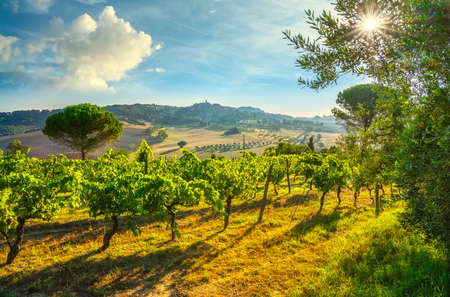Casale Marittimo village and vineyards, countryside landscape in Maremma. Pisa Tuscany, Italy Europe. 스톡 콘텐츠