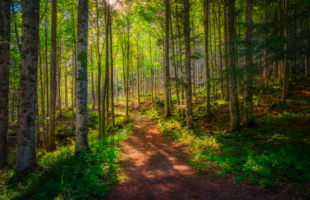 Abetone, mountain path inside a fir forest. Apennines, Tuscany, Italy. 스톡 콘텐츠