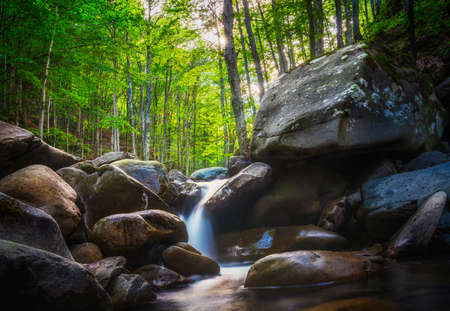 Abetone, stream waterfall inside a fir and beech forest. Apennines, Tuscany, Italy. 스톡 콘텐츠