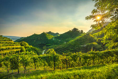 Prosecco Hills, vineyards at sunset. Site. Farra di Soligo. Veneto, Italy, Europe.