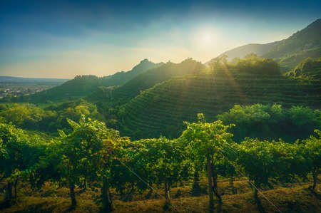 Prosecco Hills, vineyards at sunset. Farra di Soligo. Veneto, Italy, Europe.