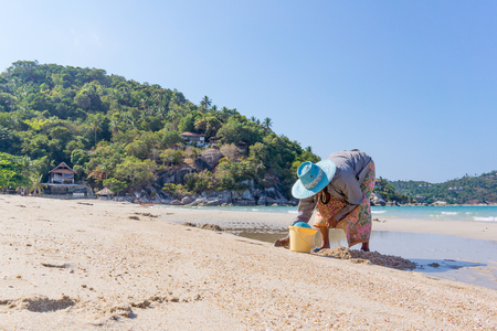 Thong Nai Pan Yai, Koh Pangan, Thailand, April 26, 2016 , Thai woman digs up mussles on the beach  and collects them in a bucket Editorial