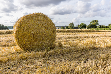 Round yellow hay bale in a large field, Borkop, Denmark, August 27, 2017 Editorial
