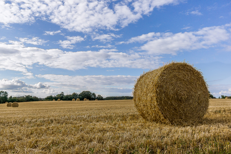 Round yellow hay bale in a large field, Borkop, Denmark, Augusr 27, 2017 Editorial