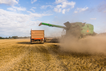 Big combine at a yellow field, harvesting in Borkop, Denmark , August 27, 2017 Editorial