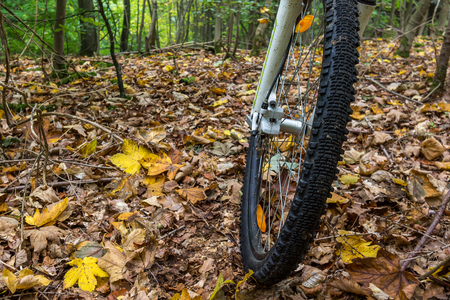 The front wheel of a mountain bike drives over yellow leaves.  The forest has autumn coulors , Denmark, October 16, 2017 Stock Photo