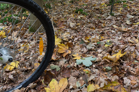 The black tire of a mountain bike rolling over yellow leaves on the ground, Denmark, October 16, 2017