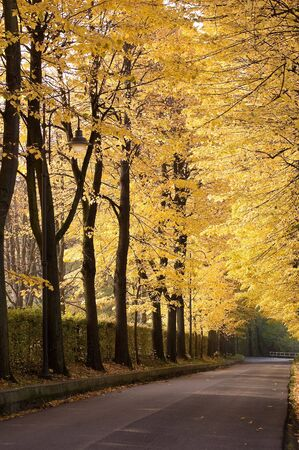 tree-lined avenue Stock Photo - 5988903