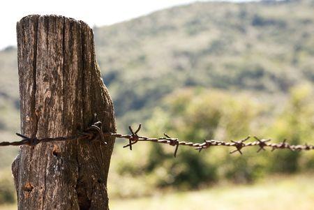 barbed wires: valla de alambre de p�as oxidado  Foto de archivo