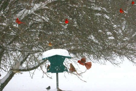 Birds at a feeder in snow photo