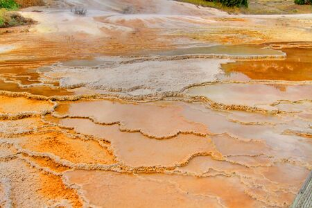 Colorful Bacterial Mat in Mammoth Springs In Yellowstone National Park photo
