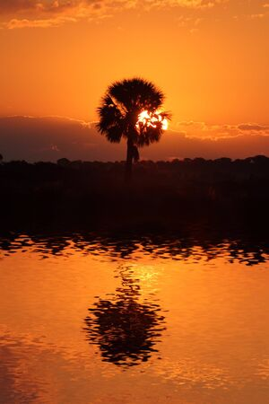 Sunrise over the Florida Everglades with a palm tree and water photo