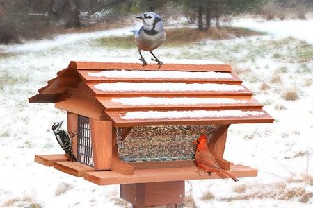 Northern Cardinal (Cardinalis), Blue Jay (Cyanocitta cristata) und Downy (Picoides pubescens) auf einem Zubringer im Schnee