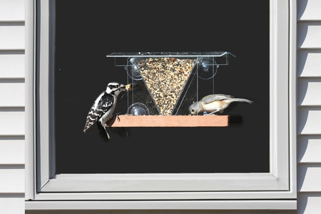 downy woodpecker: Downy Woodpecker (Picoides pubescens) and Tufted Titmouse (Baeolophus bicolor) on a window feeder Stock Photo
