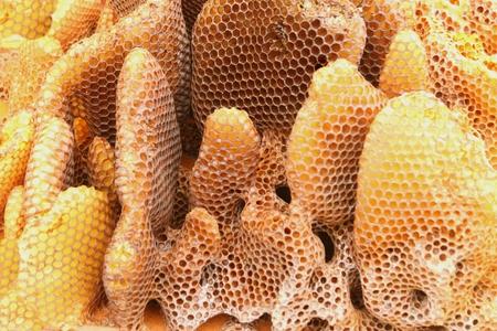 Close-up of a Honey Comb