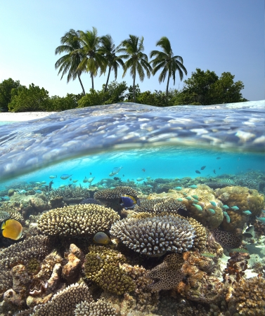 Tropical Lagoon in South Ari Athol in The Maldives in the Indian Ocean  photo