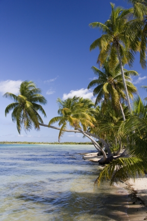 A small tropical island in Aitutaki Lagoon in the Cook Islands in the South Pacific  photo